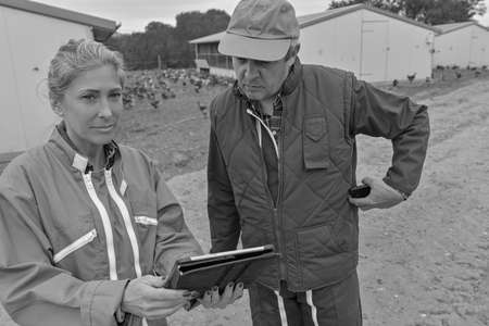 Veterinary and female farmer analyzing the growth of the chicken breeding on a digital tablet Reklamní fotografie
