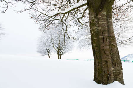 is covered: snow covered trees