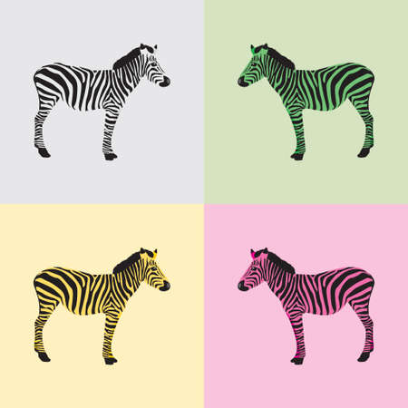 zebra heads: Zebra in black, white, green, yellow and pink color - vector Illustration