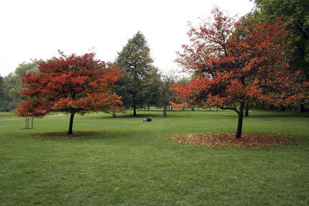 A single man lying on the grass in Hyde Park with trees loosing their leaves in autumnfall