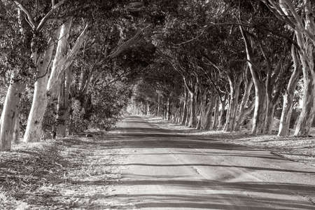 Tarred road between the trees  photo
