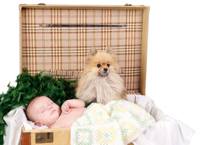 baby sleeping in a suitcase with fury Toy Pom dog photo