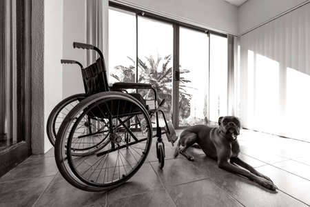 invalidity: Empty wheelchair with sad and lonely boxer dog lying on the floor Stock Photo
