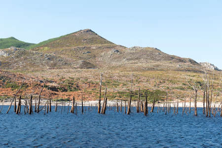 Remains of several dead trees or tree stumps in the water, deadtree valley with the mountain as a backdrop on a sunny hot day. photo