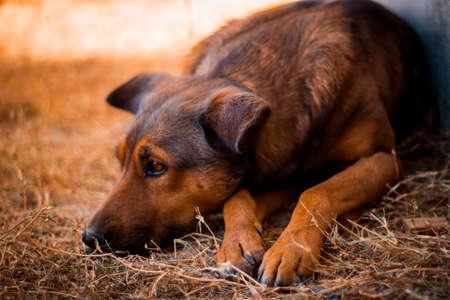 Cachorro marrón en la hierba Foto de archivo - 92598081