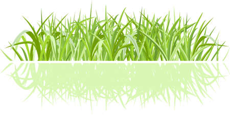 farm land: Realistic green grass isolated on white with shadow Illustration