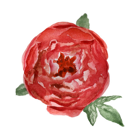 Flowers watercolor illustration. A tender red peony on a white background. The view from the top. Banco de Imagens - 123121501