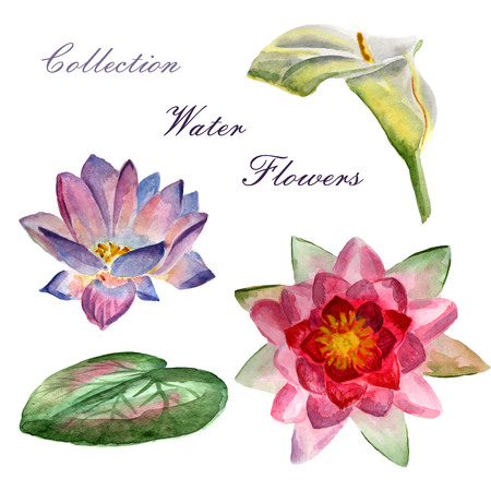 Flowers watercolor hand-panted illustration. Set of water flowers on a white background.