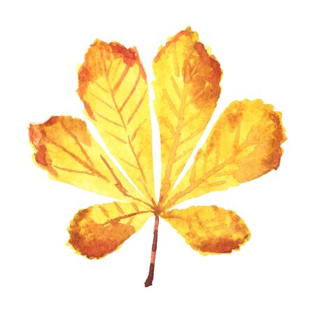 Watercolor hand-painted leaf chestnut isolated on a white background Imagens - 133204751