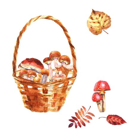 Watercolor hand-drawn composition with wooden basket with mushrooms isolated on a white background Stockfoto