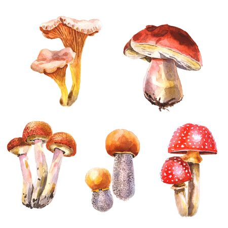 Watercolor hand-painted set of mushrooms isolated on a white background Stockfoto