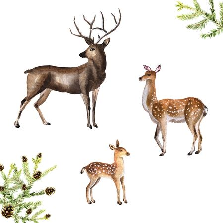 Watercolor hand-drawn forest deer, doe and fawn isolated on a white background with fir branches