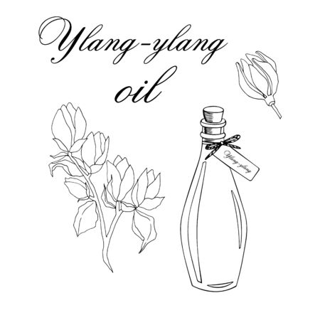 Vector sketch illustration with essential oil of ylang-ylang tree on a white background