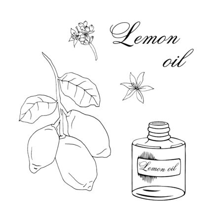 Vector sketch illustration with essential oil of lemon on a white background Illustration
