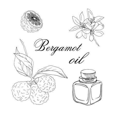 Vector sketch illustration with essential oil of bergamot on a white background