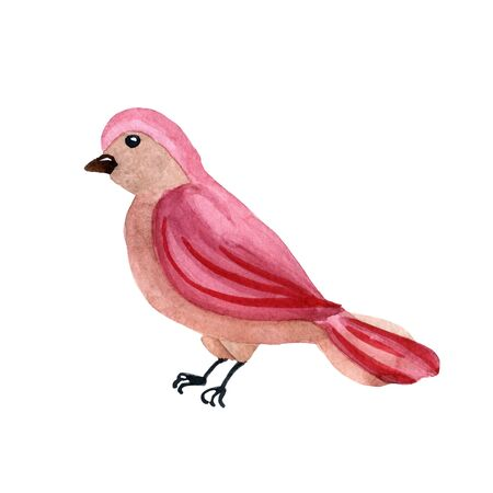 Watercolor cute pink bird isolated on a white background