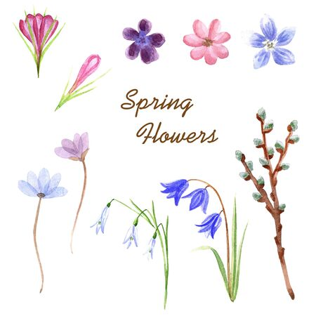 Watercolor delicate spring flowers isolated on a white background
