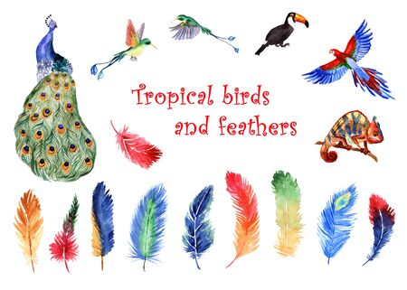 Watercolor set of bright tropical feathers and tropical birds isolated on a white background