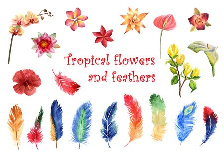 Watercolor set of bright tropical feathers and tropical flowers isolated on a white background