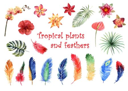 Watercolor set of bright tropical feathers and tropical plants isolated on a white background