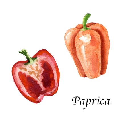 Watercolor botanic illustration with paprica on white background. Hand drawn food collection with seasonings, herbs and vegetables. Perfect for culinary books, magazines, textiles. Archivio Fotografico
