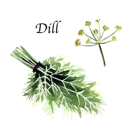 Watercolor botanic illustration with dill on white background. Hand drawn food collection with seasonings, herbs and vegetables. Perfect for culinary books, magazines, textiles.
