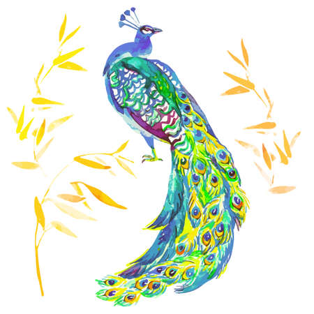 peacock feathers: Watercolor vector for your design.