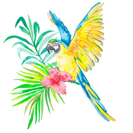 Tropical birds isolated on white background. Macaws. Art.  イラスト・ベクター素材