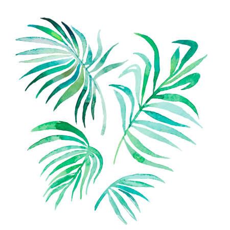 tropical evergreen forest: Art Vector for your design. Illustration