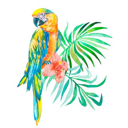 macaw: Macaws. Art. Illustration