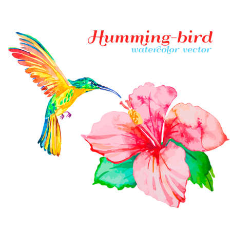 humming: Watercolor. Vector for your design. Illustration