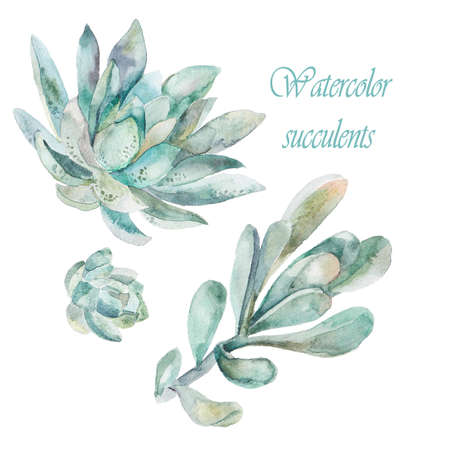 agave: Fashionable and quality art. Watercolor handmade painting.