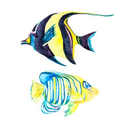 trigger fish: Illustration for your design and work. Handmade. Illustration