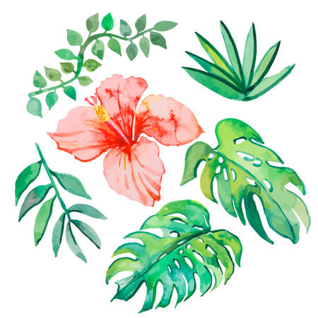 philodendron: Illustration for your design and work. Handmade. Illustration