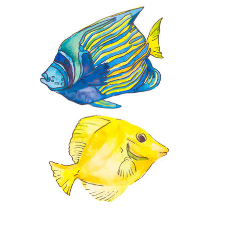 trigger fish: Illustration for your design and work. Watercolor