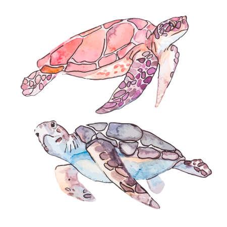 tortuga caricatura: Ilustración para su diseño y trabajo. Hecho a mano.