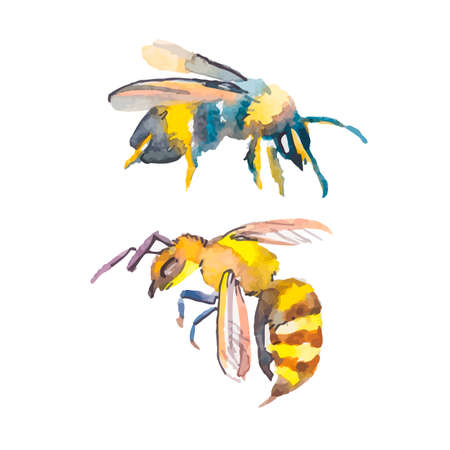 bee cartoon: Illustration for your design and work. Handmade. Illustration