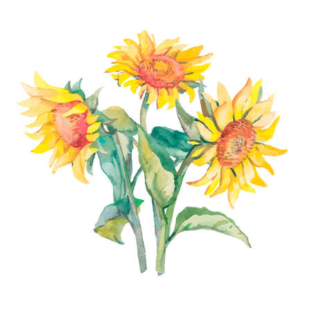 sunflower isolated: Illustration for your design and work. Watercolor. Stock Photo