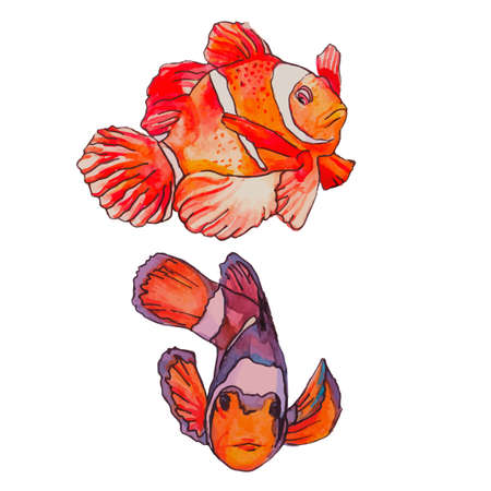 trigger fish: Illustration for your design and work. Watercolor. Stock Photo
