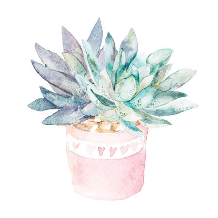 High quality watercolor. Isolated pot with succulents. Stock Photo