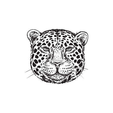 Hand drawing Leopard face isolated illustration on white background. Portrait of Jaguar. Cute fluffy face of Big cat.Predator head sketch.