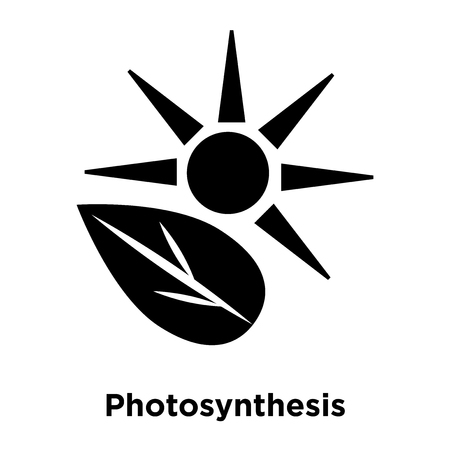 Photosynthesis icon vector isolated on white background, logo concept of Photosynthesis sign on transparent background, filled black symbol