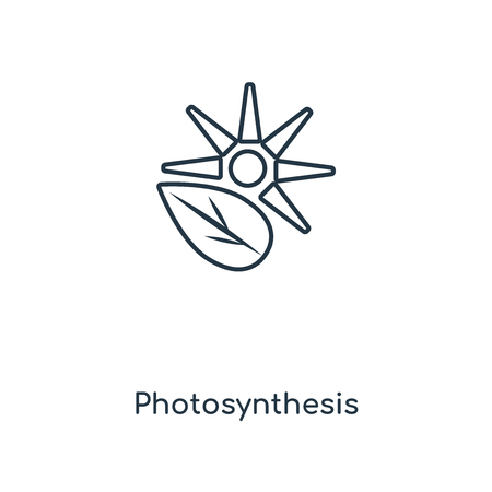 Photosynthesis concept line icon. Linear Photosynthesis concept outline symbol design. This simple element illustration can be used for web and mobile UI/UX. Illustration