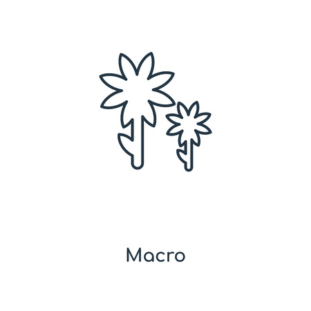 Macro concept line icon. Linear Macro concept outline symbol design. This simple element illustration can be used for web and mobile UI/UX.