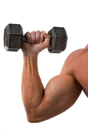 male arm: muscular del brazo masculino celebraci�n pesa  Foto de archivo