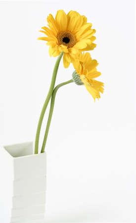 yellow gerber in vase photo