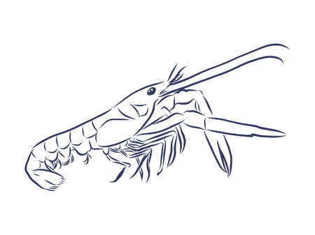 Shrimp contour illustration