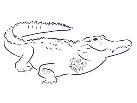 Crocodile contour illustration