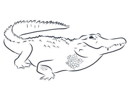 Crocodile contour illustration