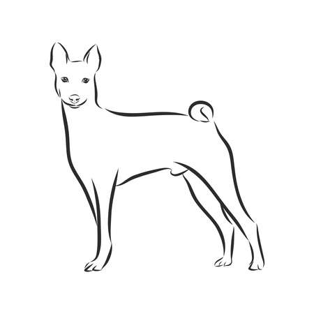 Decorative portrait of standing in profile Basenji, vector isolated illustration in black color on white background 일러스트